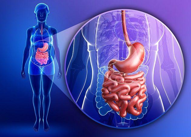 microbiota-intestinal.jpg